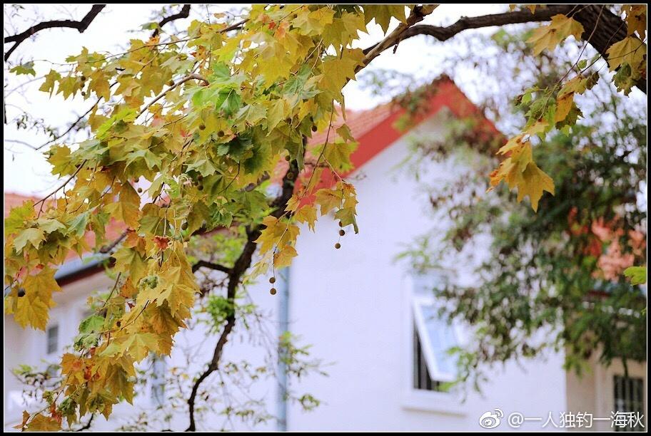 一场秋雨一场凉八大关秋色初染美景怡人