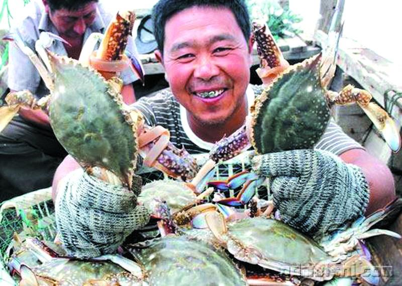 南蟹北上今年梭子蟹丰收价格走低市民享口福