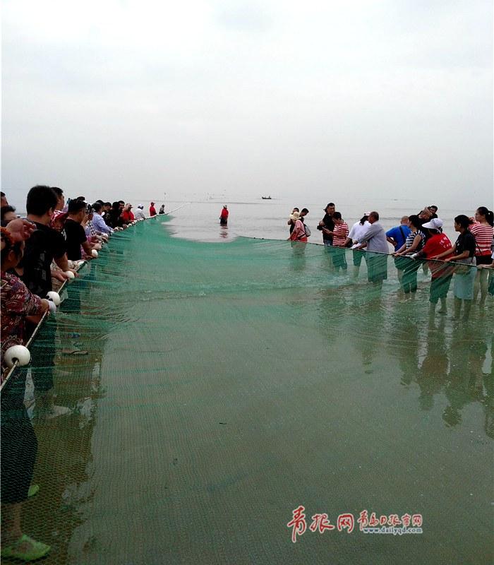 共拉网、收鱼获!实拍青岛灵山湾国际拉网节