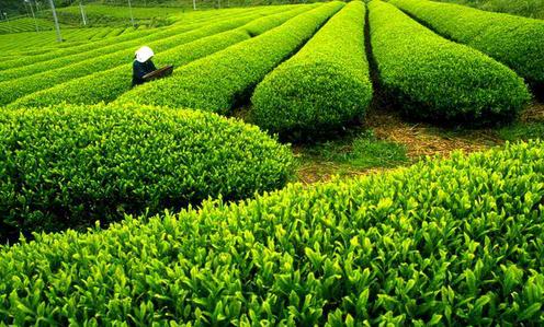 青岛5处入选山东休闲农业和乡村旅游示范名单