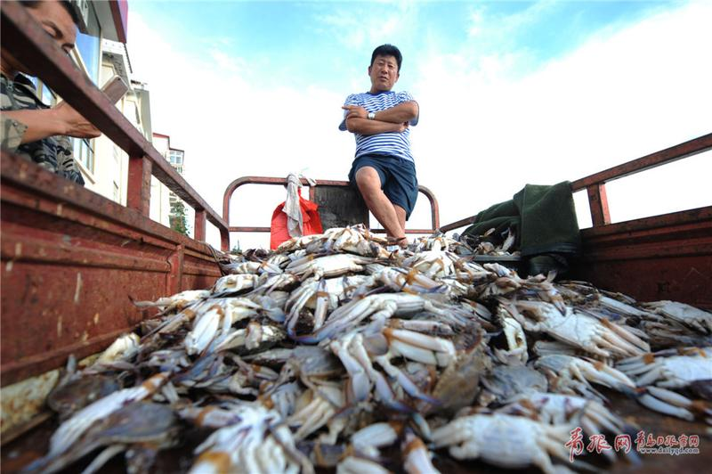 青岛渔民海捕归来 一斤重大螃蟹供不应求(图)