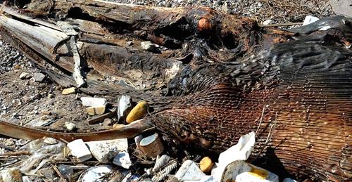 青岛海滩惊现6米长巨型生物遗骸你们看是啥?
