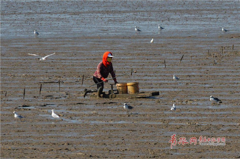 鸥鹭回迁青岛:渔民与候鸟和谐共存绘生态美景