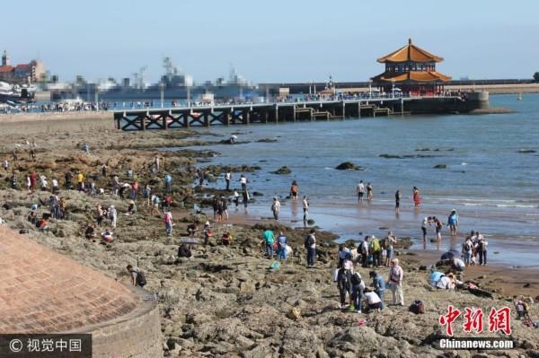 组图:青岛退大潮 市民扎堆栈桥海滩挖蛤蜊