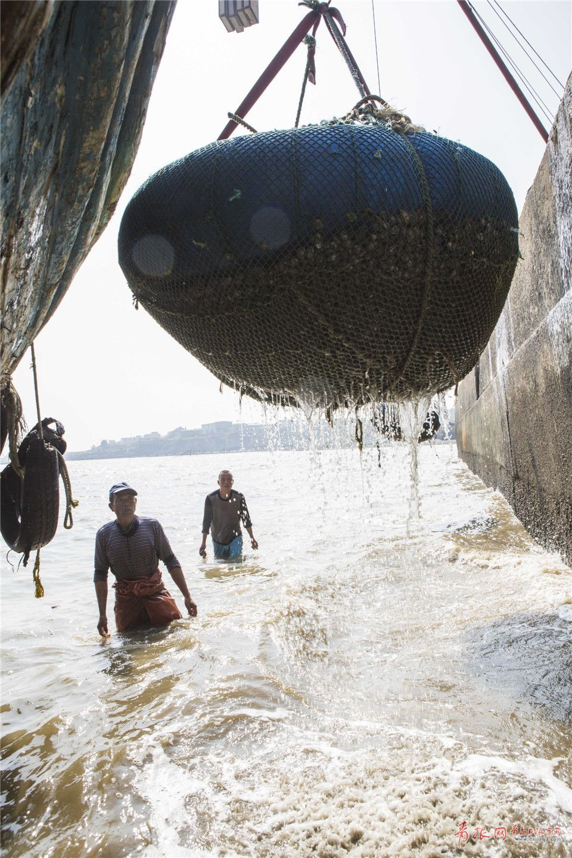 实拍青岛渔民踩高跷挖蛤蜊 你一定没见过(图)