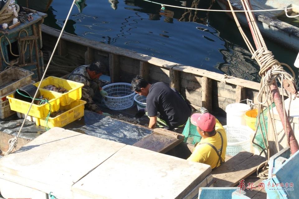 探访开海后的青岛海鲜市场 种类繁多价格实惠