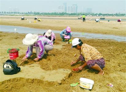 黄岛浅海蛤蜊一小时挖七八斤 市民乐得合不拢嘴