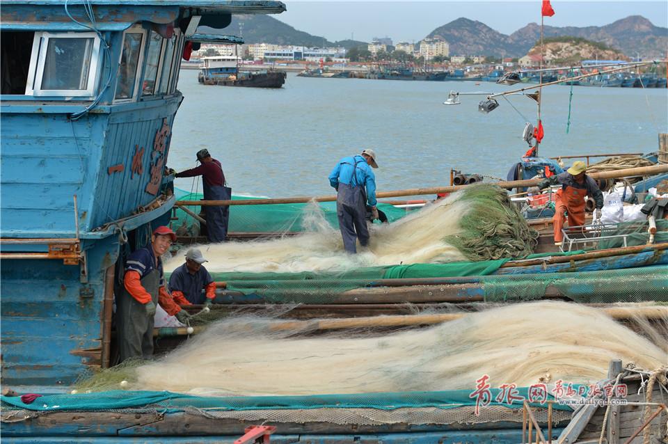 又是菊黄蟹肥时 一斤多重螃蟹抢滩青岛节日市场
