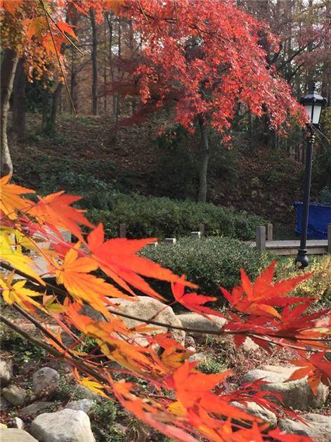 高清:秋色渐浓 八大关风景美如画游客络绎不绝