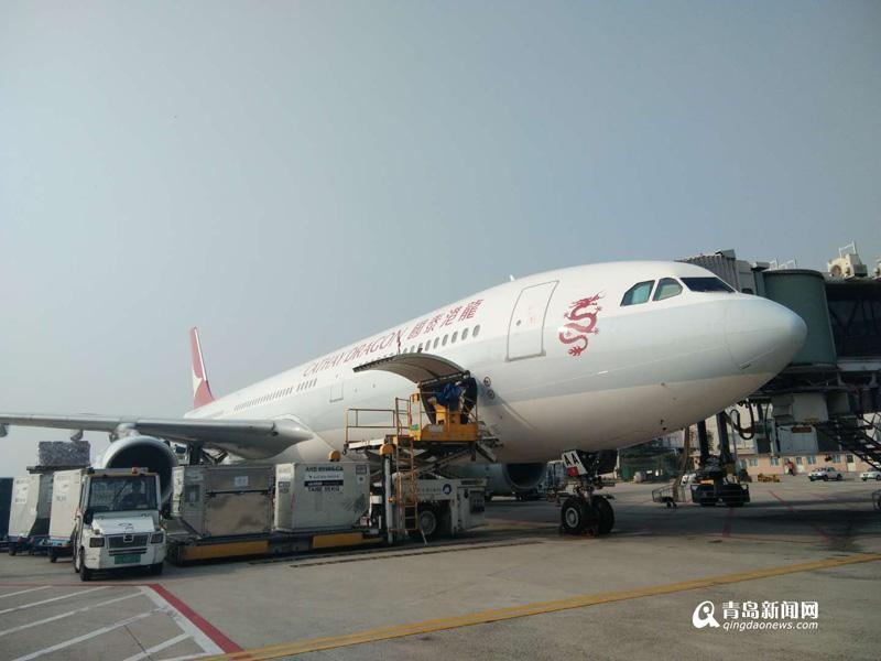 吃货有福了!170公斤澳洲龙虾坐飞机到青岛
