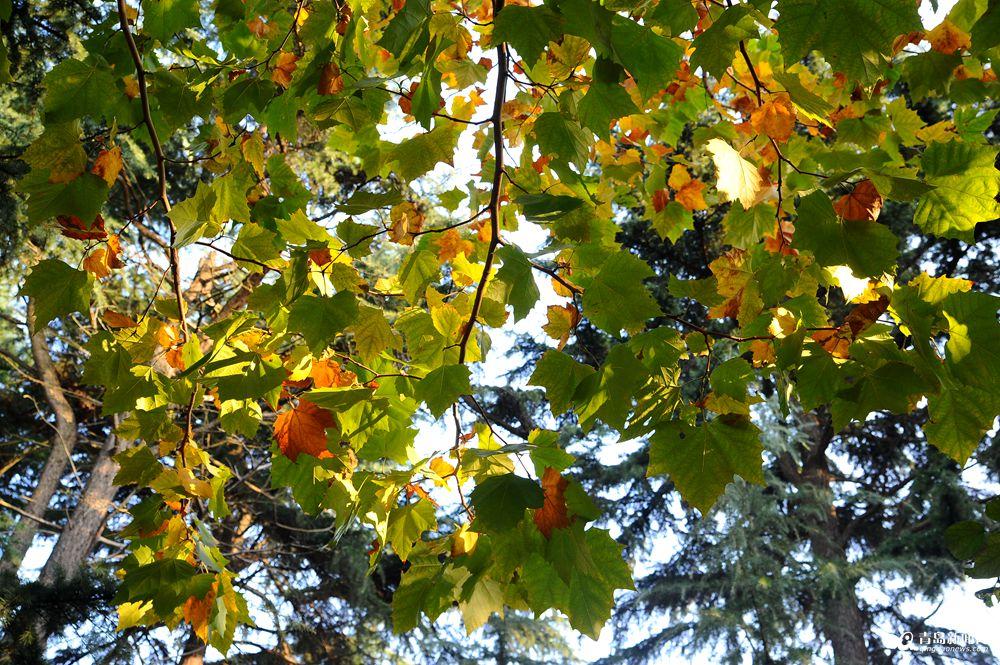 高清:秋日行走大学路 感受老城区优雅之美