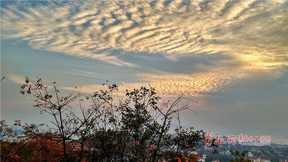 站在青岛山上远眺前海一线,红瓦绿树掩映中,海上美景尽收眼底.