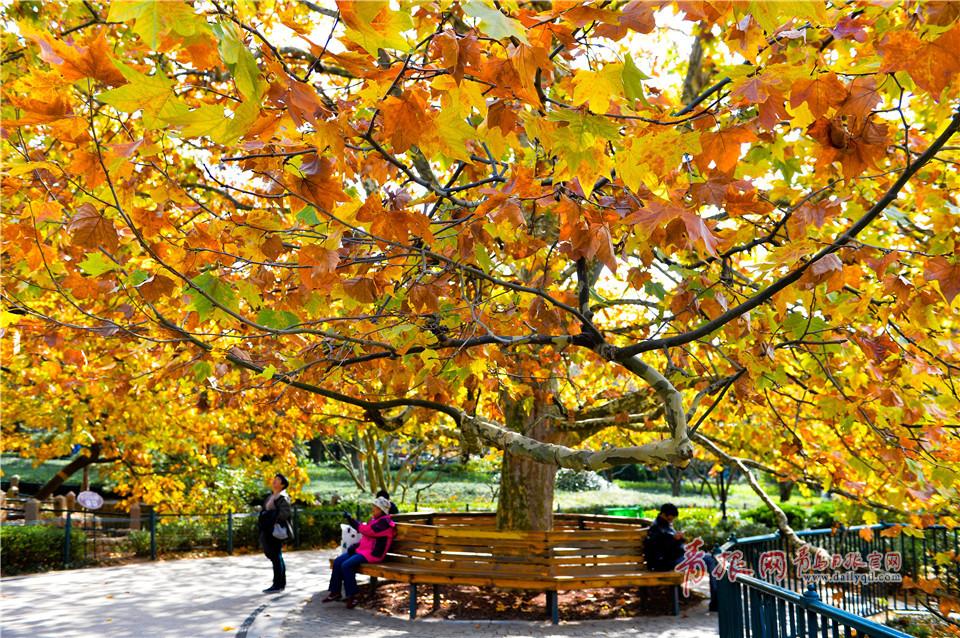 满园秋色美如画 中山公园开启五彩斑斓模式