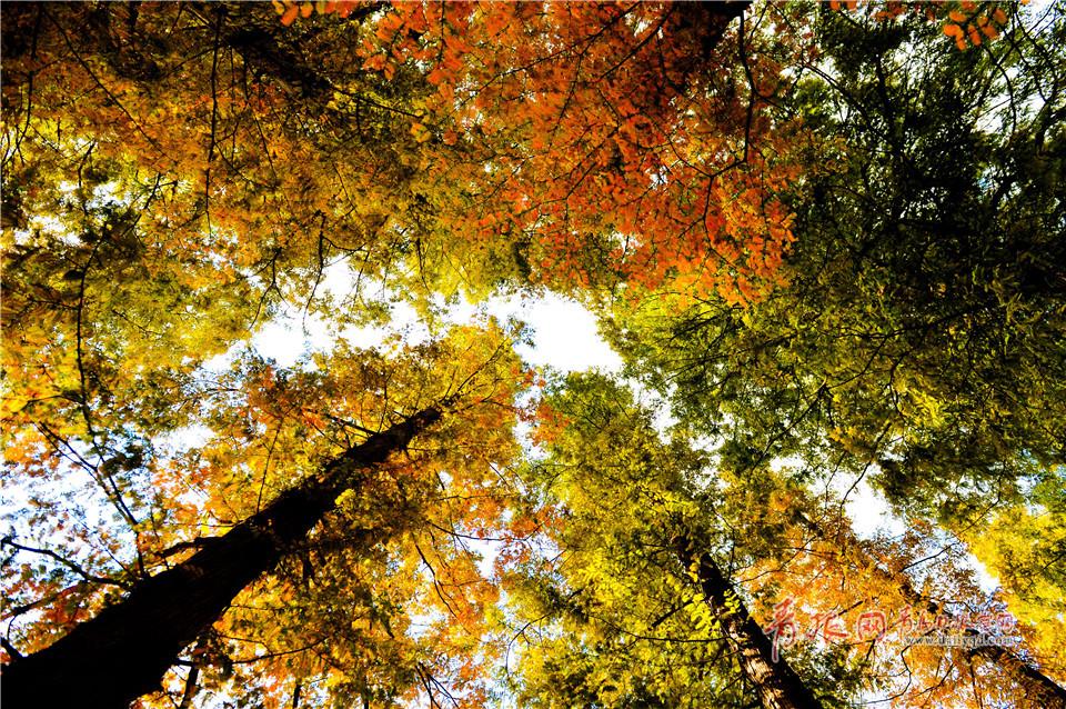 满园秋色美如画中山公园开启五彩斑斓模式