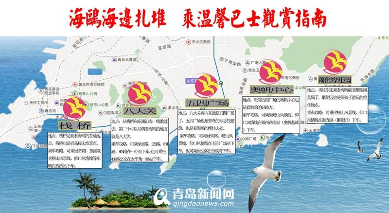 沿海一线海鸥扎堆 温馨巴士送上最全观赏地图