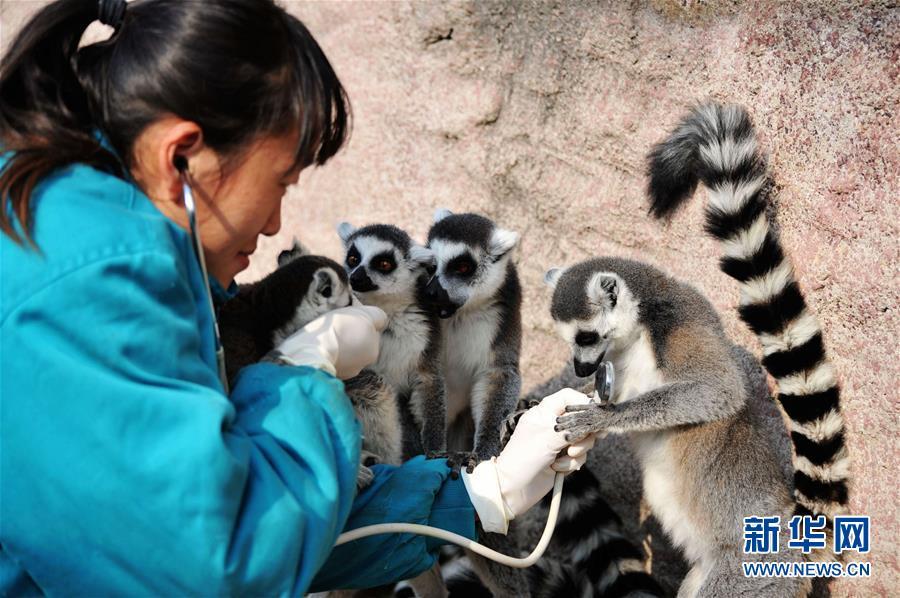 青岛森林野生动物世界体检 确保动物健康过冬