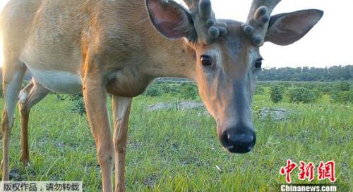 """""""毫无疑问,这是获取野生动物数据的一个令人难以置信的工具."""