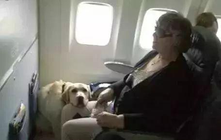 第一次坐飞机 吓得像个200多斤的孩子 ▼ 这只成熟汪, 一到飞机上就