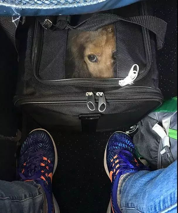 青岛人 宠物可以和你一起坐飞机了 800元一位