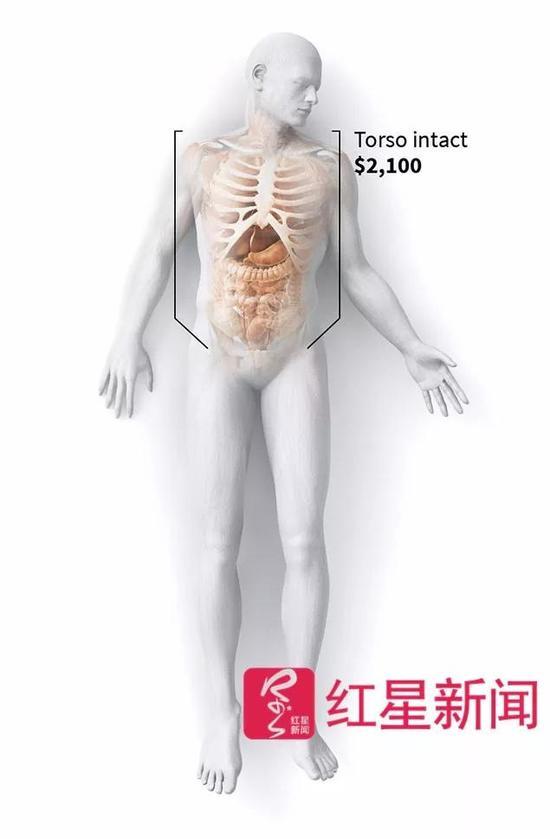 美国人捐文版被下载肢解头颅:货品500单腿1300语遗体九下册电子年级教材语文当成图片