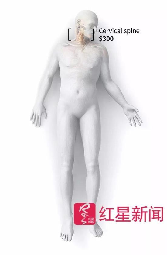 澳门送彩金的网站:美国人捐遗体被当成肢解货品:头颅500单腿1300