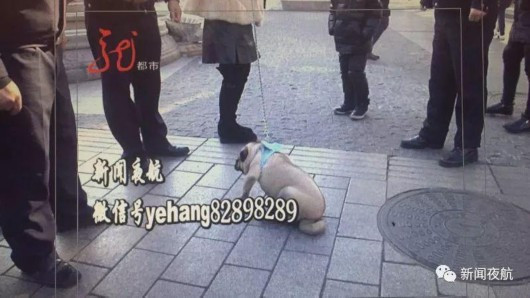 急速赛车彩票官网:主人煤气中毒_家中藏獒不让120进去施救致主人死亡