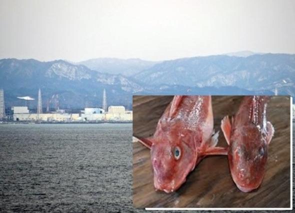 """北京赛车能不能玩:日本福岛核电站附近海域发现超标""""辐射鱼"""""""