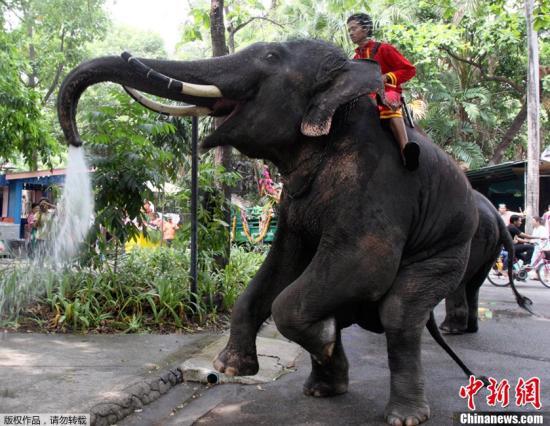 """泰国举办""""大象日""""活动 六头象畅享10吨水果大餐"""