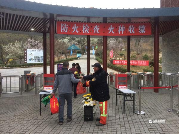 崂山风景区管理处工作人员为进山祭扫的市民免费发放鲜花