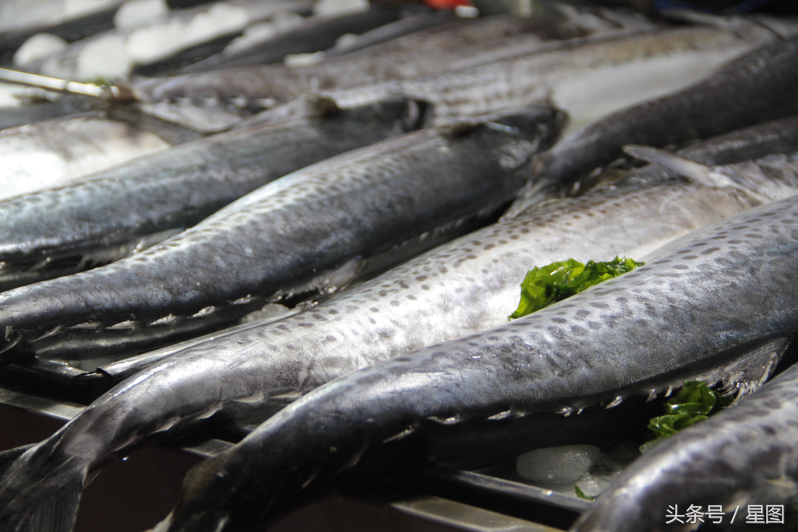 鲅鱼跳 丈人笑!青岛鲅鱼上市 每条20斤比孩子都大