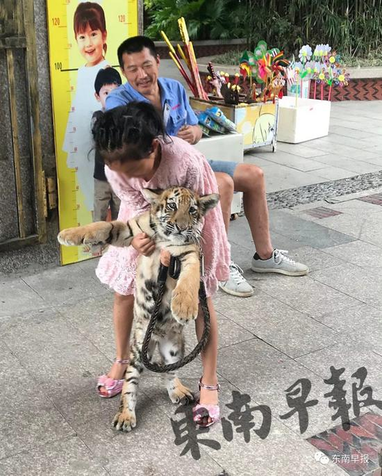 9岁女孩公园遛老虎 其父:老虎还小没有攻击性(图)