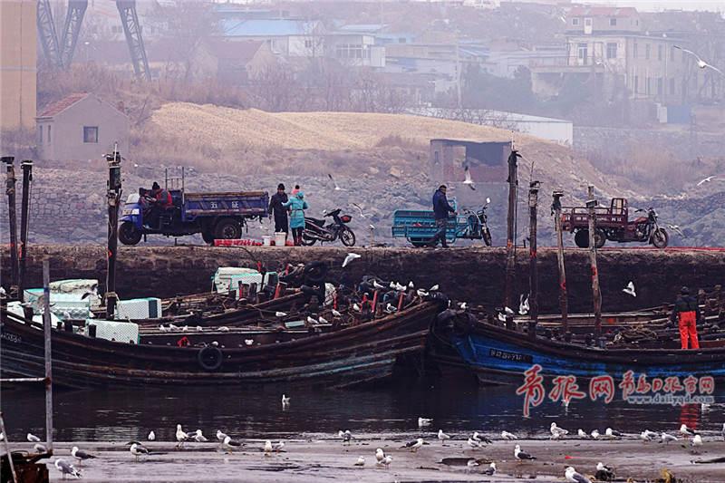 新春首航青岛渔船满载而归 刚上岸就被等候已久人们抢空