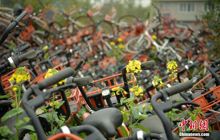 四川乐山上千辆共享单车堆放农田