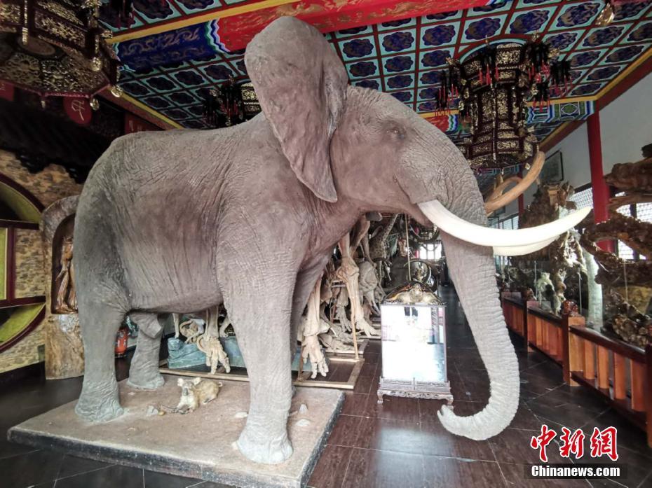 """探访牡丹江""""毁林私建庄园""""内有亭台楼阁和多种动物标本"""