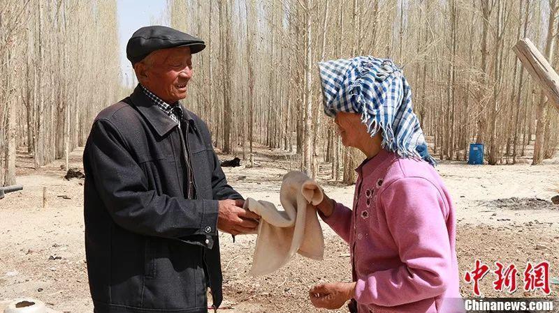活人不能让沙子欺负 新疆一对夫妇35年种树80万棵,爱情学概论音译歌词