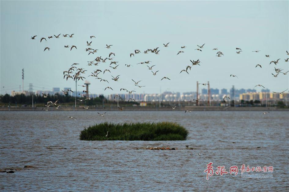 http://www.yhkjzs.com/haikoufangchan/24778.html