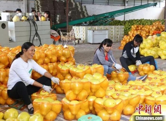 春节猪肉、蔬菜、水果会集体涨价?农业农村部回应