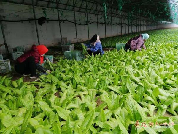 复工率达到95% 青岛涉农企业已提