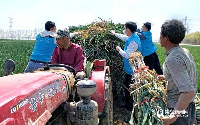 爱心助农!中建八局青岛公司采购滞销蔬菜1.4万斤