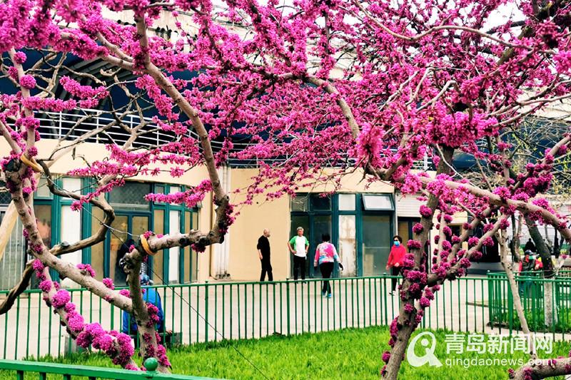 最新网赚项目:春暖花开市民重回公园 戴口罩晨练秀十八般武艺
