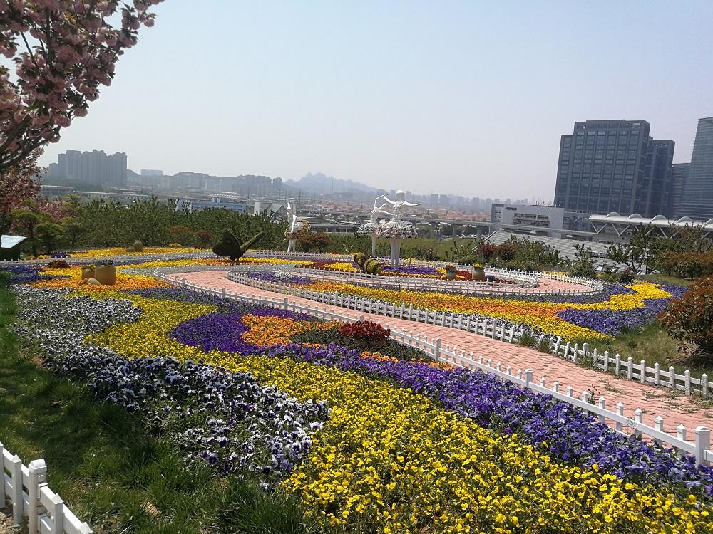 免费游花海!第三届青岛花卉博览会今日启动