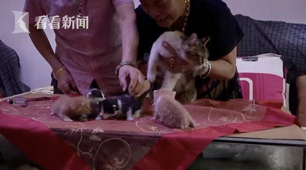 老奶奶喂了一只流浪猫 第二天收到四份惊喜