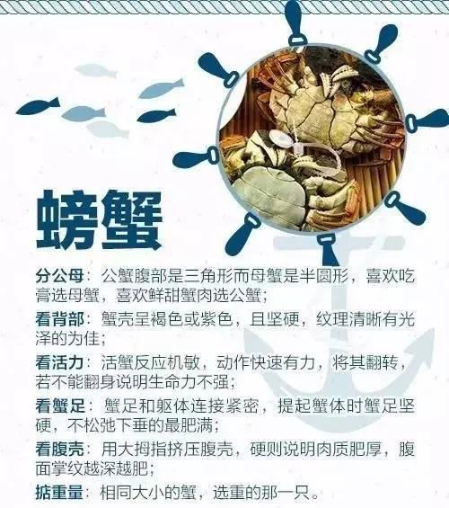 9月1日开海!青岛海鲜去哪儿买?看这儿