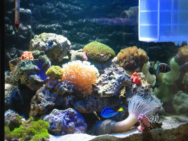 节前海水鱼缸成新宠 价格一千多到上万元(图)
