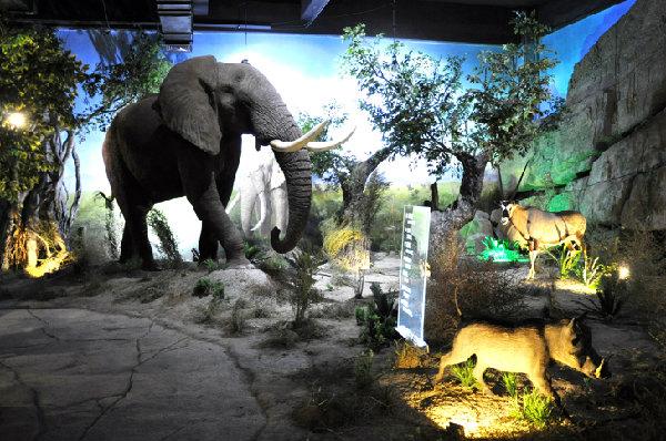 青岛滨海学院世界动物标本艺术馆