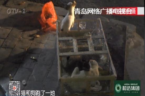 二十多只小猫小狗被弃路边 格外惹人怜(图)