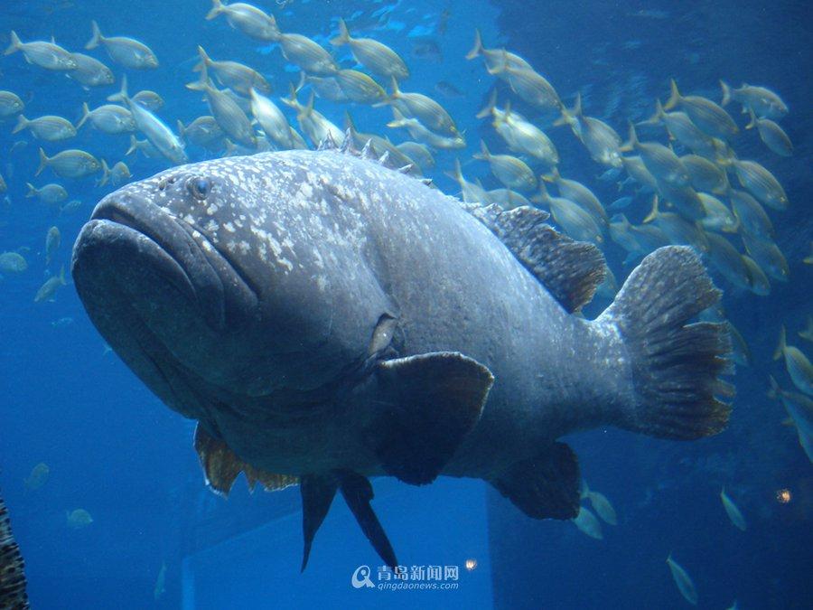 灭绝动物鱼