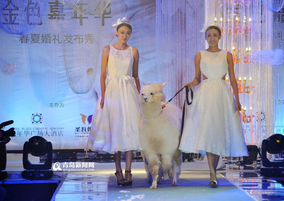 高清:美女模特牵羊驼走秀 另类婚纱秀吸人眼球
