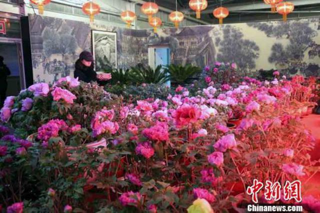 乌鲁木齐市植物园还举办了牡丹节作为第十四