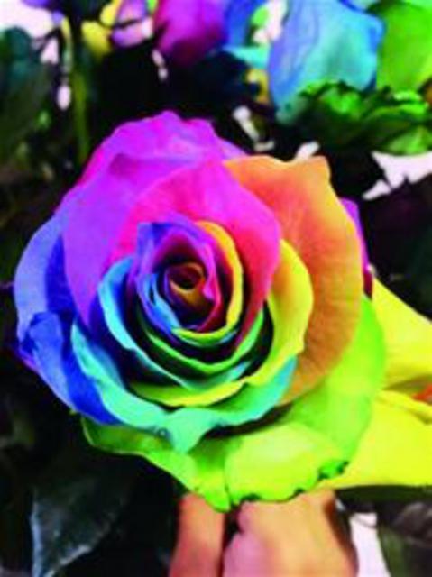 在忙着包装玫瑰花束